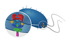 Cryo-electron tomography: imaging flagellar motor protein structures