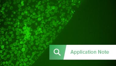 Image Thumbnail Application note CLEM Giant VirusesRES_380x215