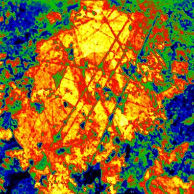 PMT image of quartz in sandstone