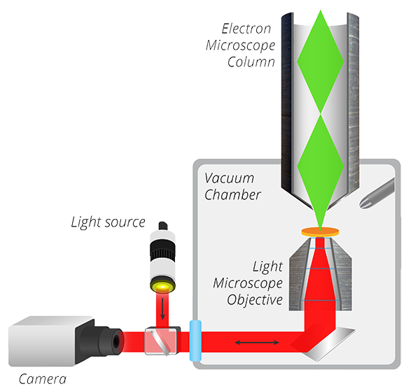 Schematic of the SECOM correlative light and electron microscope