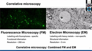 Real-time in situ correlative microscopy for cellular biology